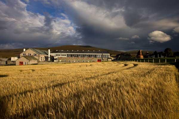 Glenfarclas_0042 from barley field